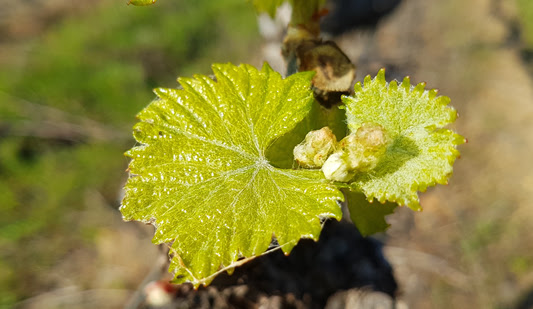 Celebrating Spring with Creation Chardonnay photo