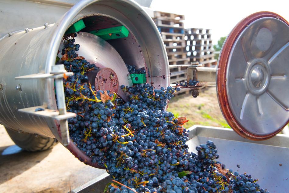 Fermentation 101: the case for whole clusters – Sediments – The Last Bottle Wines Blog photo