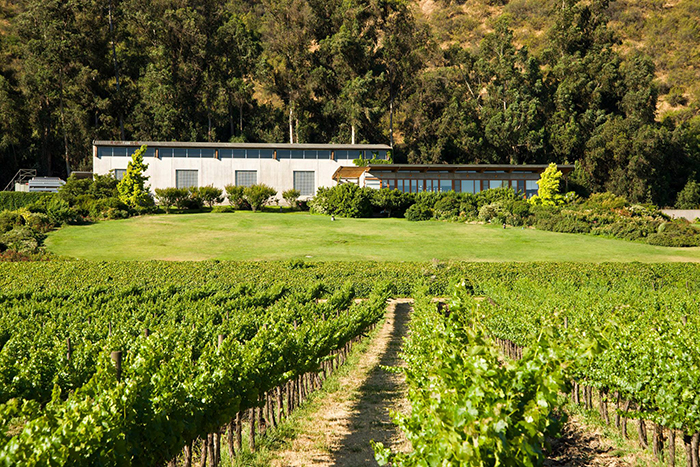Learn About The Smaller Side Of Chilean Wine photo