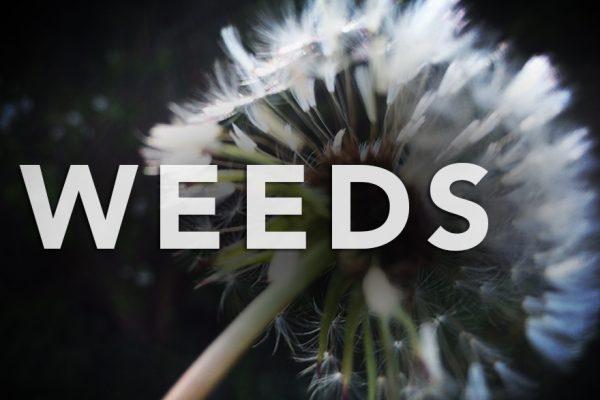 Weeds between the Vines photo