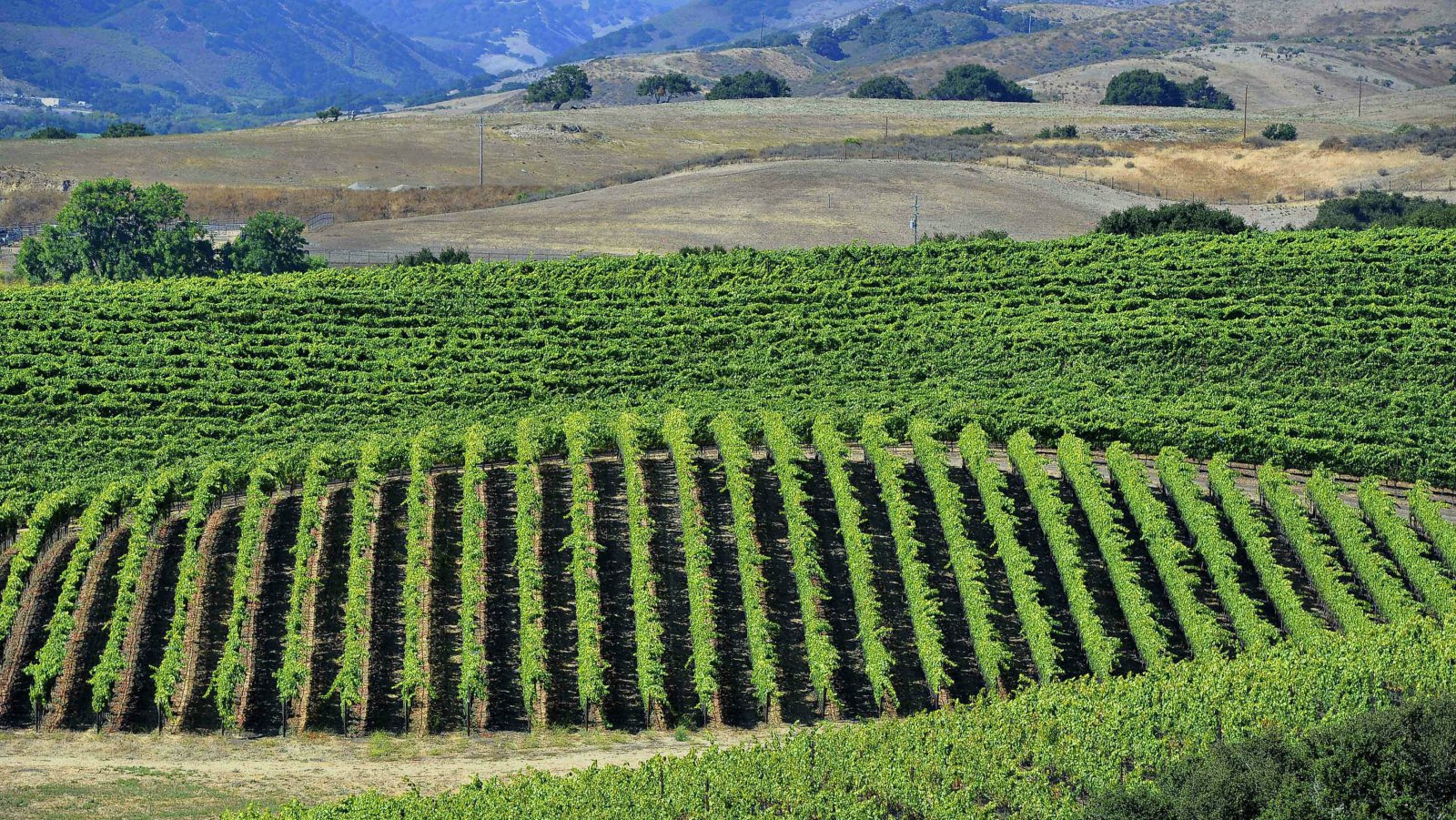 An ancient drought-friendly farming process could become the next organics photo