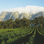 This is what the Cape's very first visitors thought about the South African winelands photo