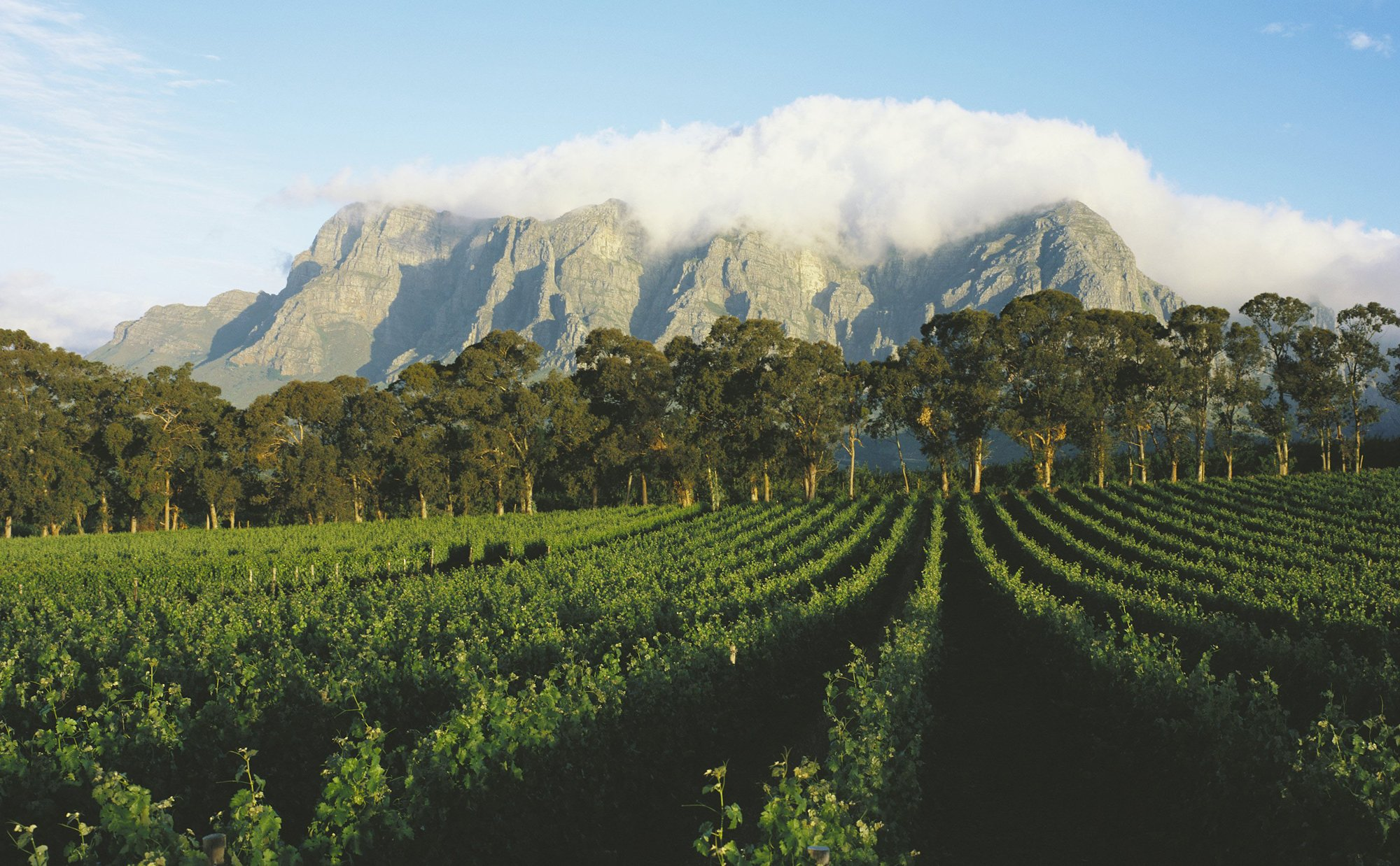 Wine Tasting in South Africa's Winelands photo