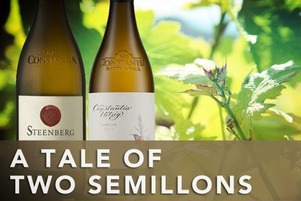 A tale of two Semillon photo