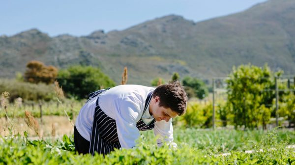 From Garden to Kitchen to Table at Leopard`s Leap photo
