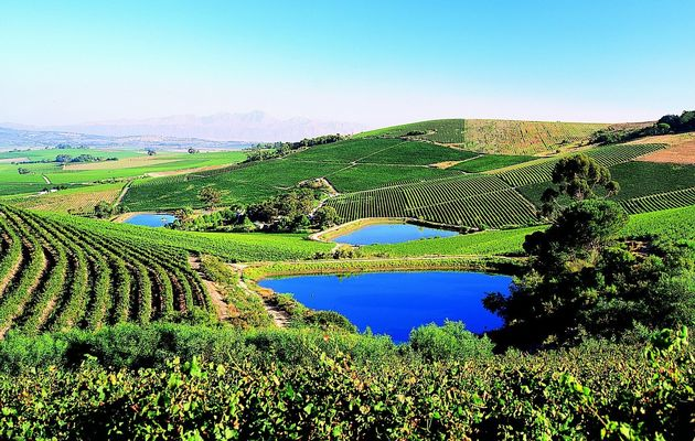 Top 10 Wine Farms – List it, find it, book it photo