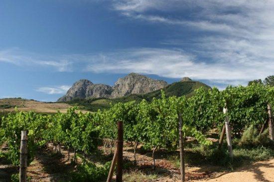 backsberg vineyards e1479882916273 New Release Backsberg John Martin Shows Excellence of 2017 Vintage