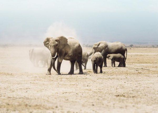 Help Amarula to save Africa`s Elephants photo