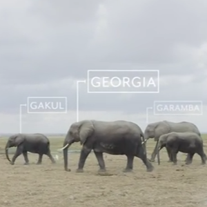 Watch: Amarula Encourages Naming African Elephants In A Bid To Save Them photo