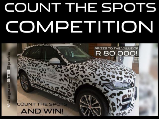 Count the spots and win! photo