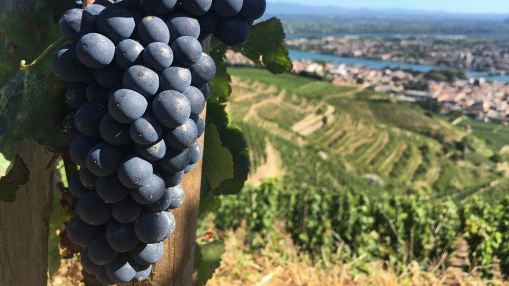 Does Shiraz Wine Come From Iran? photo