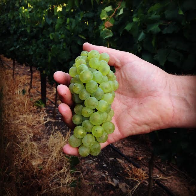 De Wetshof Harvest 2017 Shows Each Year Has Its Own Fingerprint photo