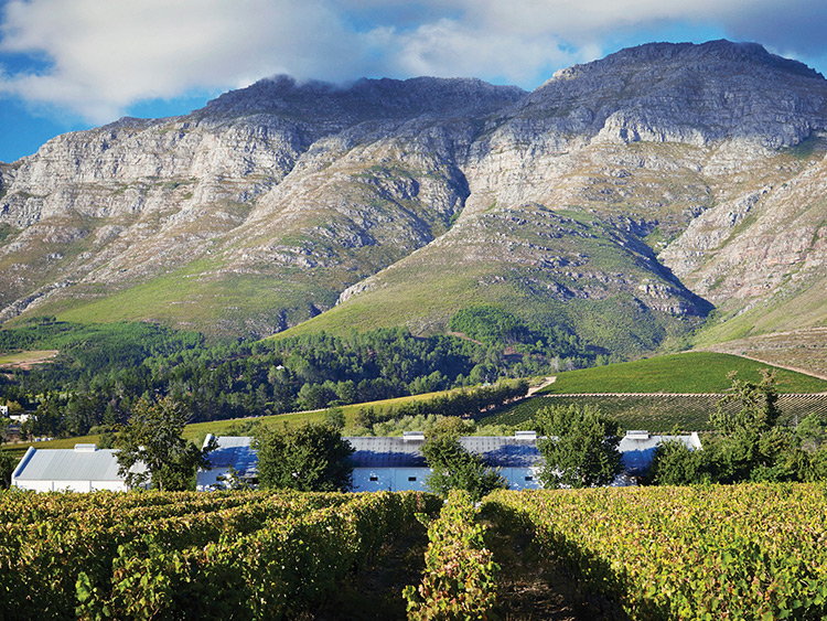 Why You Should Be Drinking South African Wine photo
