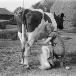 Milk is one of humanities first foods photo