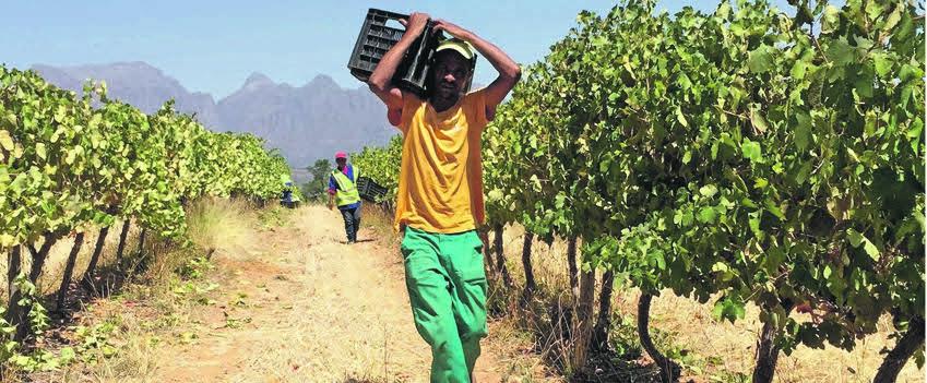 Local wine Thokozani's success under the Ovation brand photo