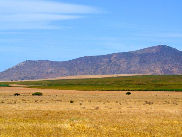Gourmet road trip: Great restaurants and farm stalls in the Swartland photo