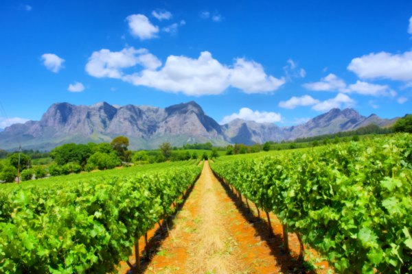 The Best Wines In South Africa photo