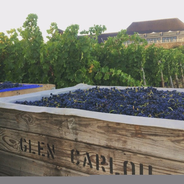 2017 Marks the 30th Harvest at Glen Carlou photo
