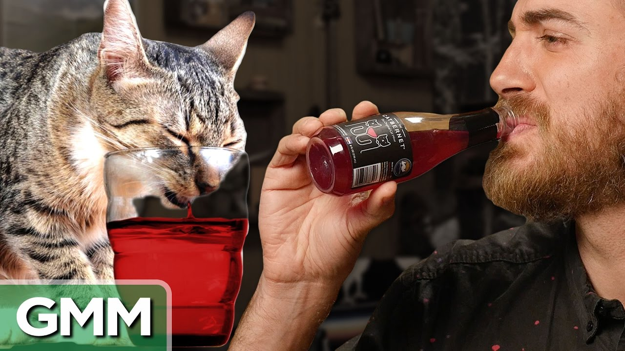 Rhett and Link tasting Apollo Peak's Cat Wine, so you don't have to photo