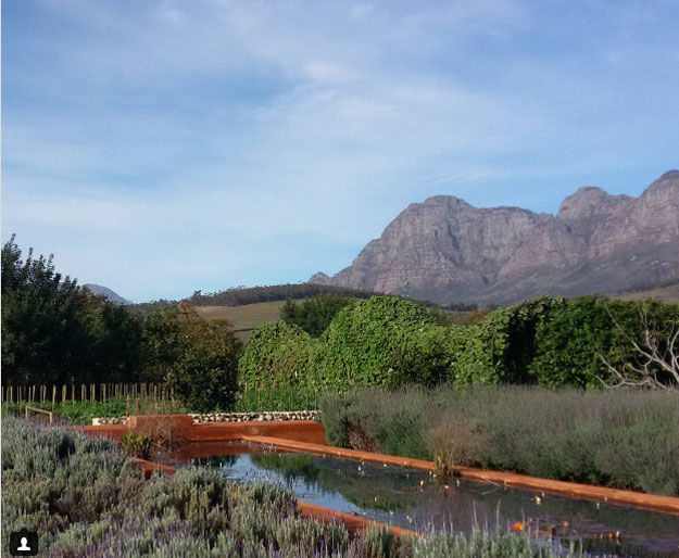 Five Of The Best Vineyards In The Western Cape photo