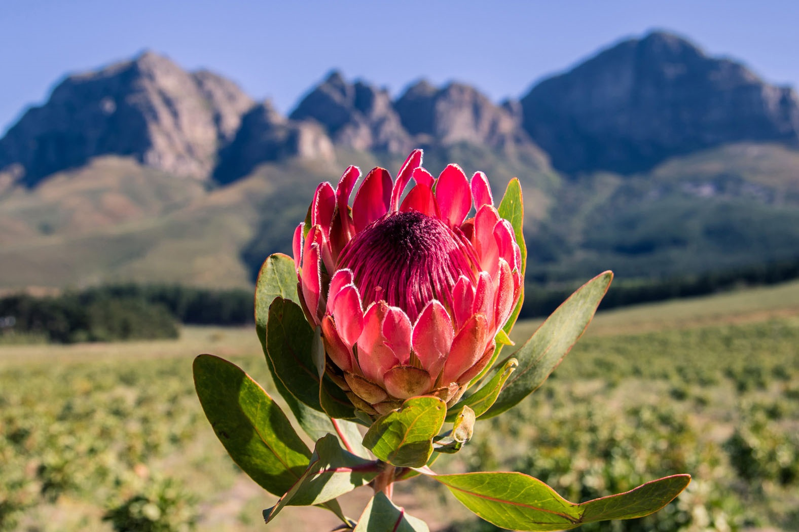 Summer Winners Of #seasonsoflourensford Instagram Comp Announced photo