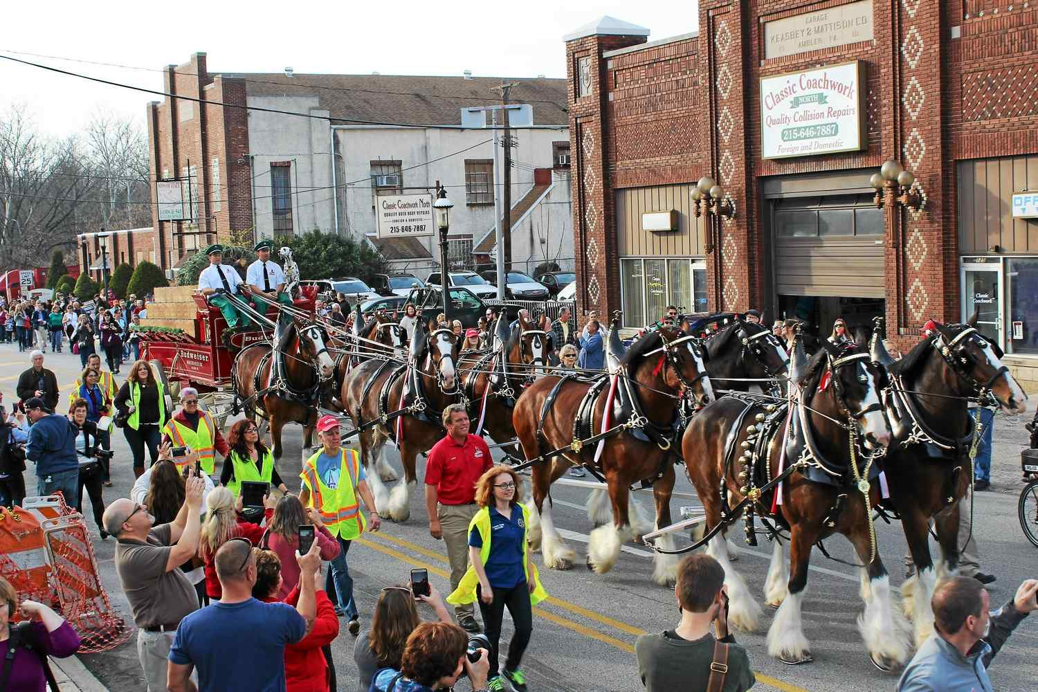 Budweiser Clydesdales Will Be In Pottstown Memorial Day Parade photo