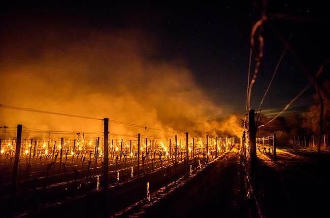 'devastating' Frost Strikes Bordeaux Vineyards Next photo