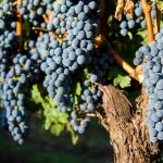 3 World Famous Merlot Wines photo