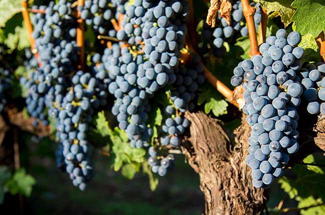 3 World Famous Merlot Wines photo