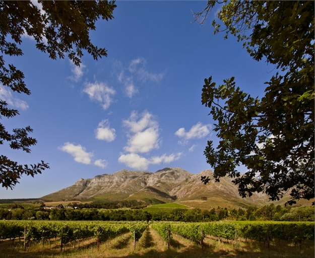 Upper Blaauwklippen Vintners Hosts Annual Wine Tasting Experience photo