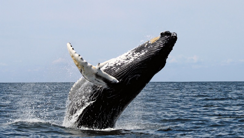Whale Watching In South Africa photo