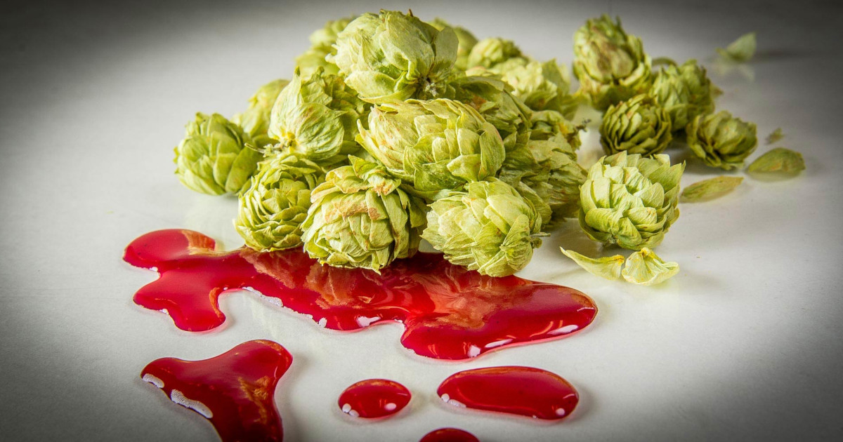 Killing Craft? Ab Inbev Blocks Sale Of South African Hops To American Craft Brewers photo