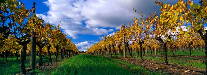 The 10 Most Wanted Chardonnays photo