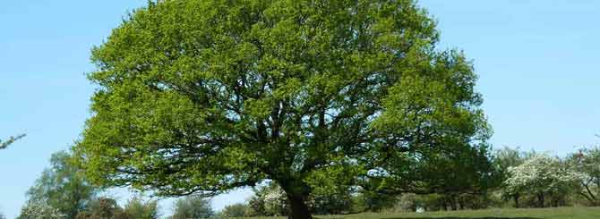 The Ultimate Guide To Oak In Winemaking photo