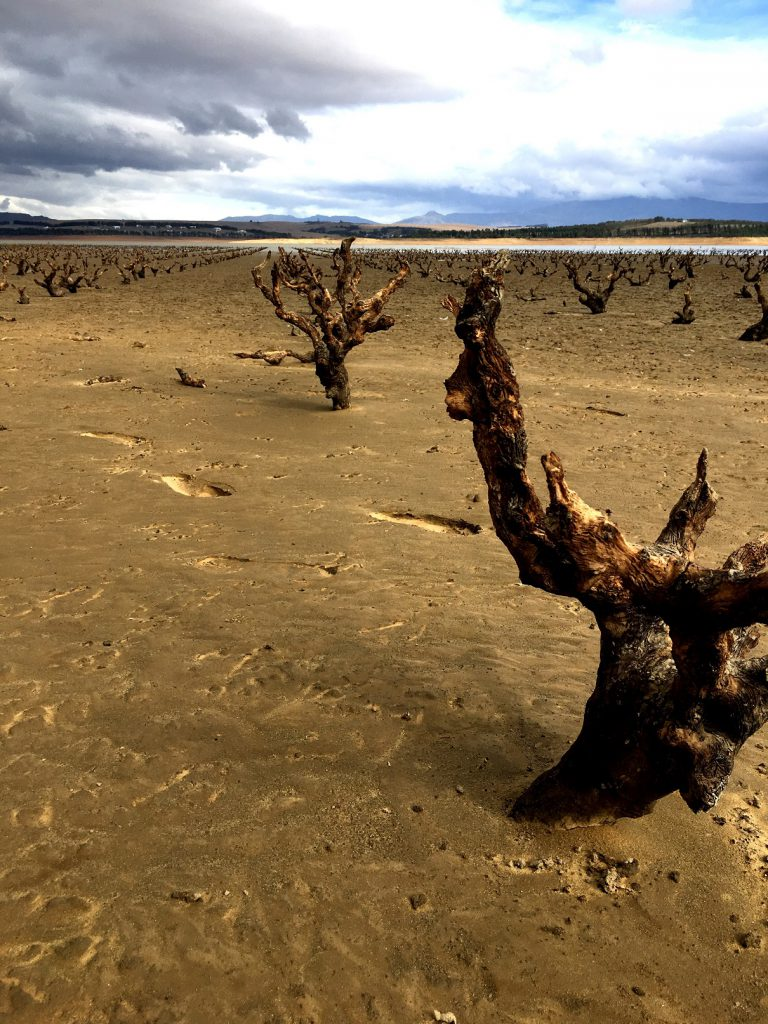 ?ghost Vines? Re-emerge In Sa Drought photo