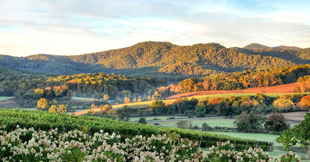 10 Incredible Wine Destinations To Visit Across American This Summer photo