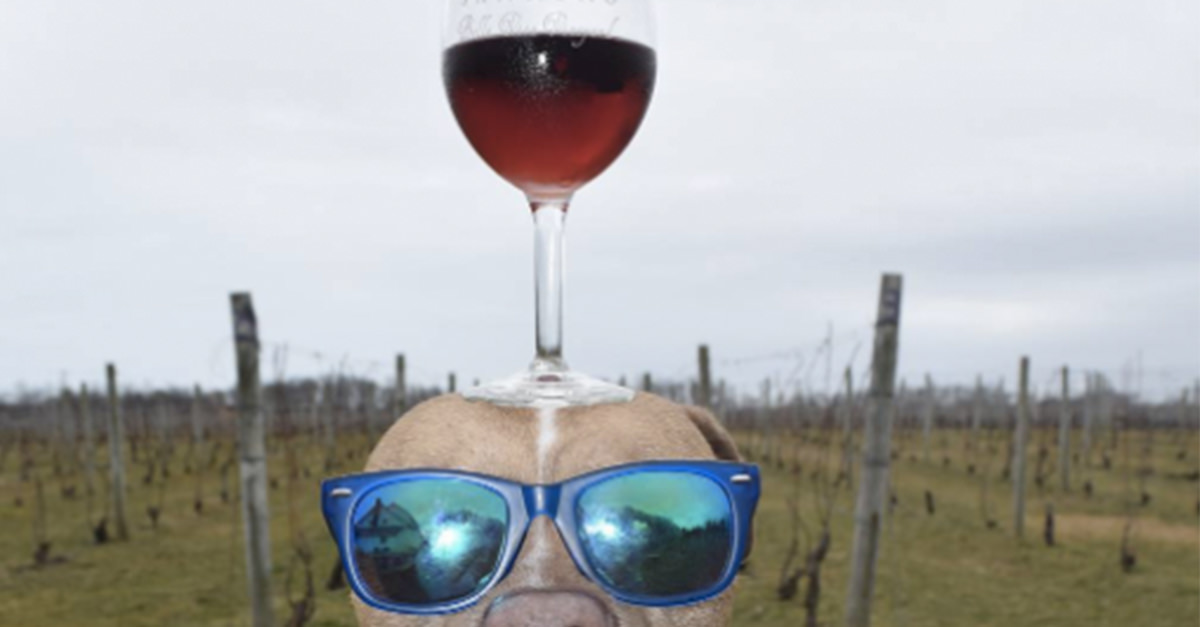 This Puppy Can Balance A Wine Glass On His Nose [photos] photo