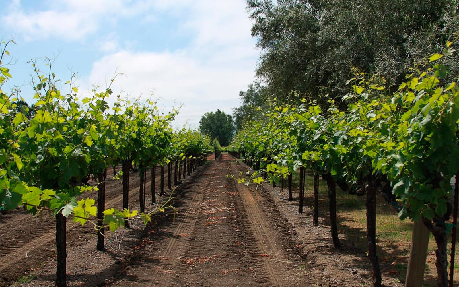 The Top Vineyards All Around The U.s. photo