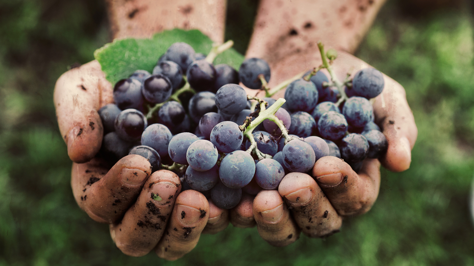 Join the Robertson Wine Valley for the 10th Annual Hands-on Harvest Festival photo
