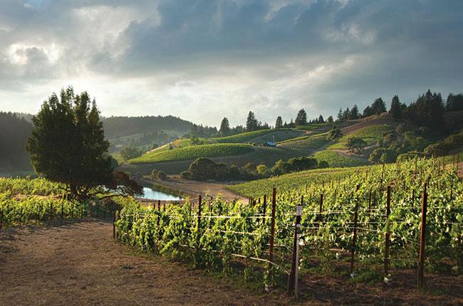 Santa Cruz Mountains Producers To Know photo