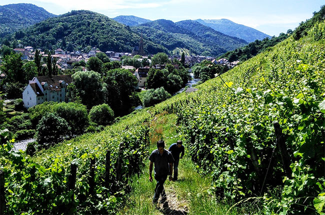 Jefford: The Alsace Grand Cru Debate And Other Tales photo