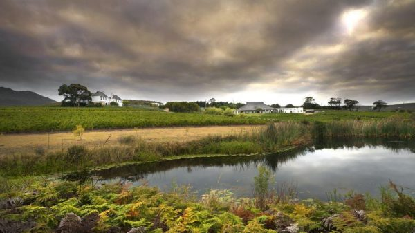 Nature Walks and Wine Tasting on offer at Bouchard Finlayson photo