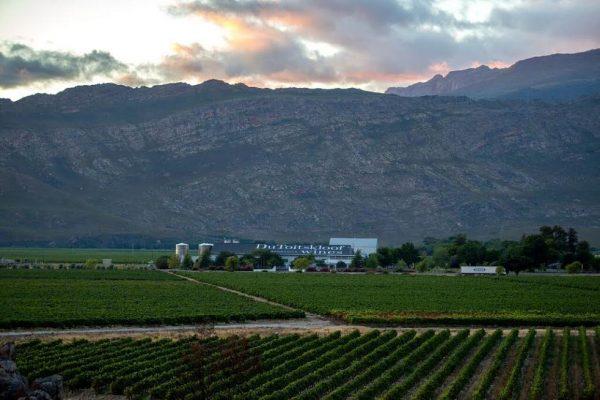 Du Toitskloof Wines Upbeat about Vineyards' Winter Recovery photo