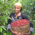 Climate Change Will Be Disastrous to Ethiopian Coffee Industry Without Intervention photo