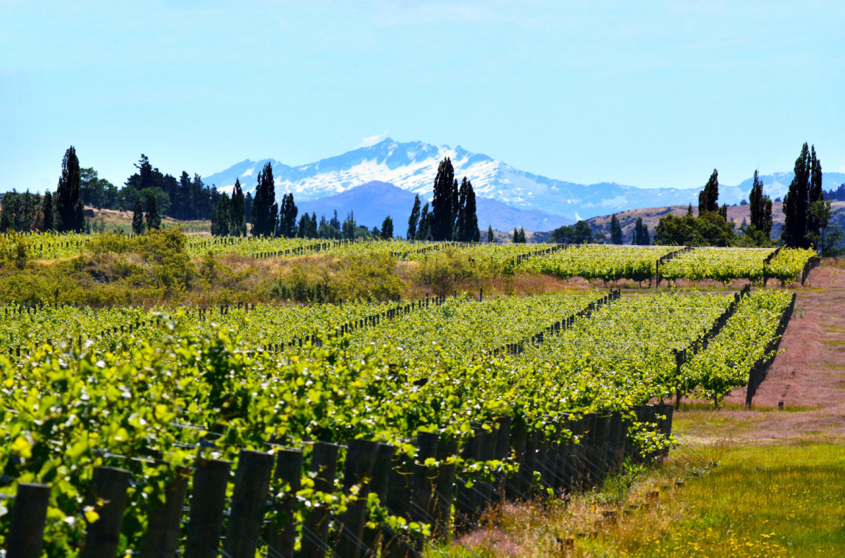 A Crash Course In Inspired Expressions Of Pinot Noir: Evans Hammond photo
