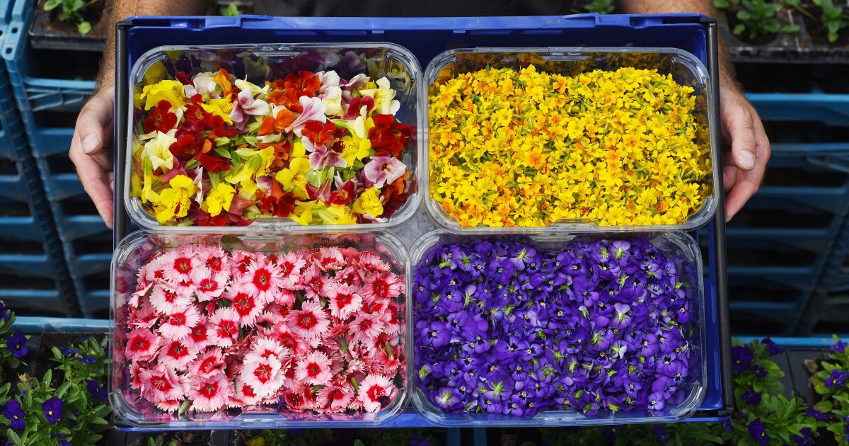 Edible Flowers Are Now Available To Buy At Sainbury's photo