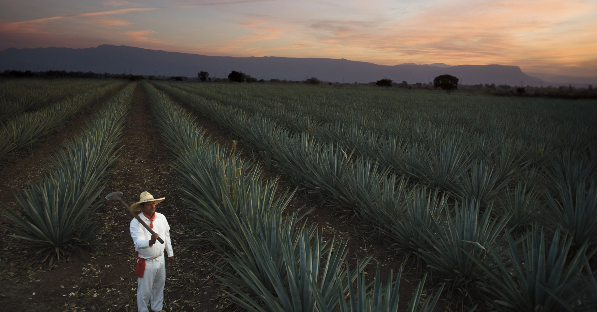 Sauza: A Story Of Family And Tequila photo