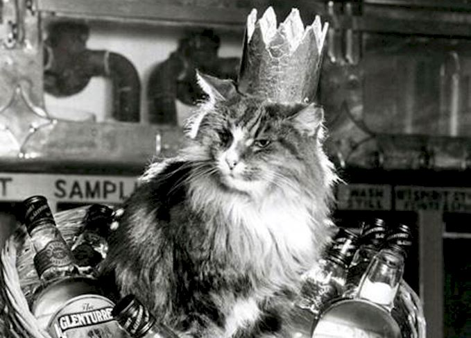 Distillery Cats: Scotch?s Legendary Mousers photo