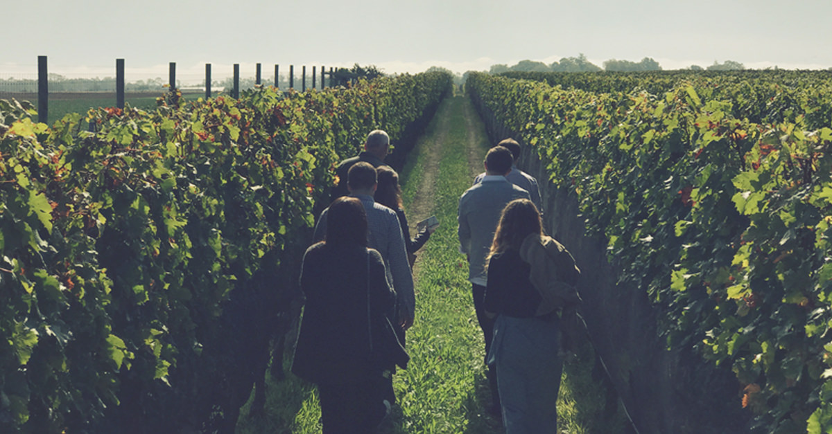 Shinn Estate Vineyards Brought Sustainable Winemaking To The Mainstream. So Why Did Its Owners Just Sell It? photo