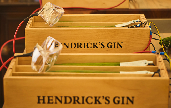Hendrick's Uses Cucumbers As Musical Instruments photo